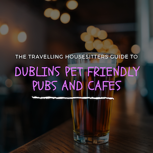 Top 6 Dog Friendly Pubs & Cafes In Dublin (Your Pooch Will Love you For Taking Them!)