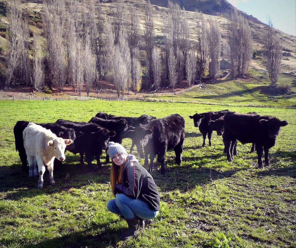 Michelle cow sitting in Wanaka